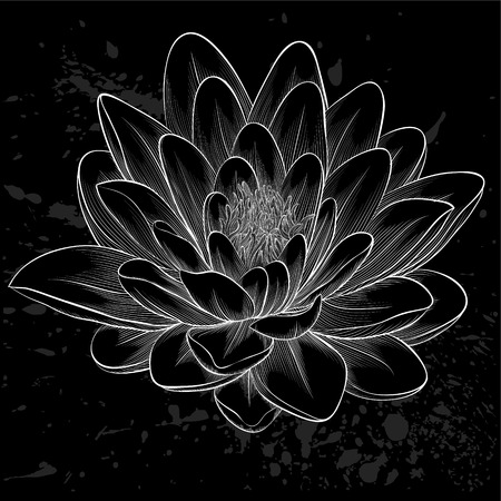 Beautiful monochrome, black and white lotus flower  Vector