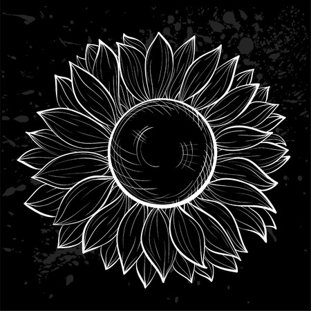 sunflower isolated: aislado hermoso girasol blanco y negro. Dibujado a mano las curvas de nivel y accidentes cerebrovasculares.
