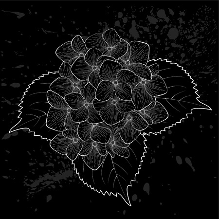 beautiful monochrome, black and white flower hydrangea isolated. Hand-drawn contour lines and strokes. Vector