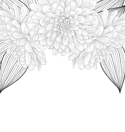 Beau noir monochrome et fond blanc avec cadre de fleurs de dahlia. Courbes de niveau et coups dessiné à la main. Banque d'images - 30312240