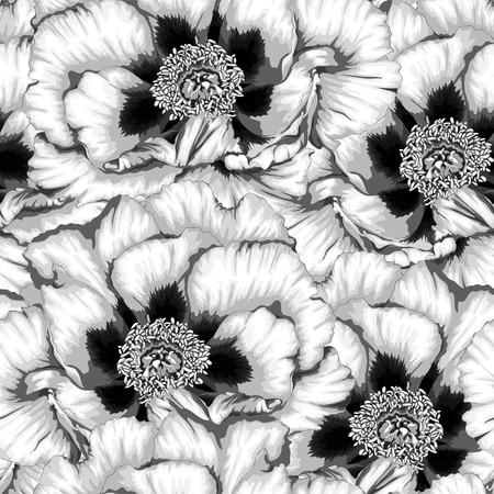 peony tree: Bella bianco e nero, sfondo bianco e nero senza soluzione di continuit� con i fiori delle piante Paeonia arborea (Albero peonia). Disegnati a mano con effetto di disegno ad acquerello Vettoriali