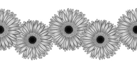 Beautiful monochrome, black and white seamless horizontal frame element of gray  gerbera flowers. Hand-drawn with effect of drawing in watercolor Vector