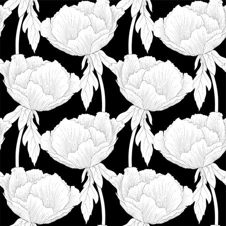 peony tree: Bella bianco e nero, in bianco e nero sfondo trasparente con fiori piante Paeonia arborea (Albero peonia) con stelo e foglie. Curve di livello e tratti disegnati a mano.