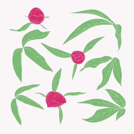 set of beautiful peony leaves and buds in vintage colors isolated on white. Hand-drawn contour lines and strokes. Vector