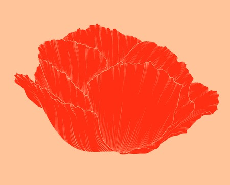 beautiful red poppy in a hand-drawn graphic style in vintage colors isolated on background. Hand-drawn contour lines and strokes. Vector