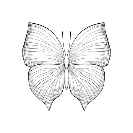 one isolated: beautiful monochrome black and white butterfly. Hand-drawn contour lines and strokes. one isolated on white Illustration