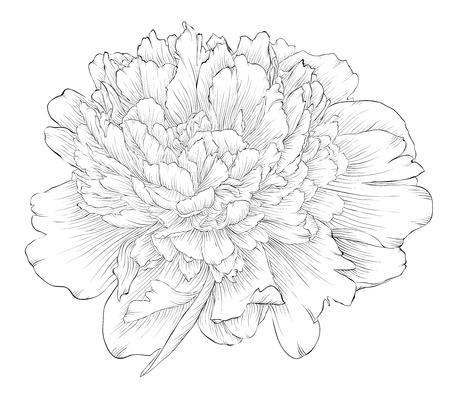 beautiful monochrome black and white peony flower isolated on white background. Hand-drawn contour lines and strokes. Ilustrace