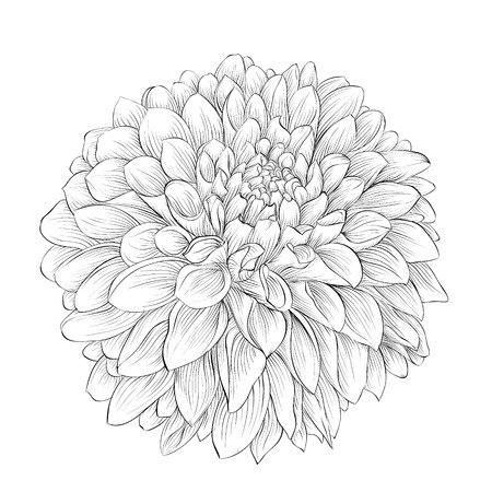 beautiful monochrome black and white dahlia flower isolated on background. Hand-drawn contour lines. for greeting cards and invitations of wedding, birthday, mothers day and other seasonal holiday Ilustração