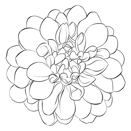 the petal: beautiful monochrome black and white dahlia flower isolated on background. Hand-drawn contour lines. for greeting cards and invitations of wedding, birthday, mothers day and other seasonal holiday Illustration