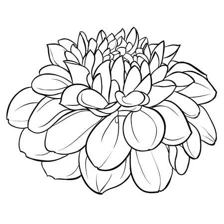 dahlia: beautiful monochrome black and white dahlia flower isolated on background. Hand-drawn contour lines. for greeting cards and invitations of wedding, birthday, mothers day and other seasonal holiday Illustration