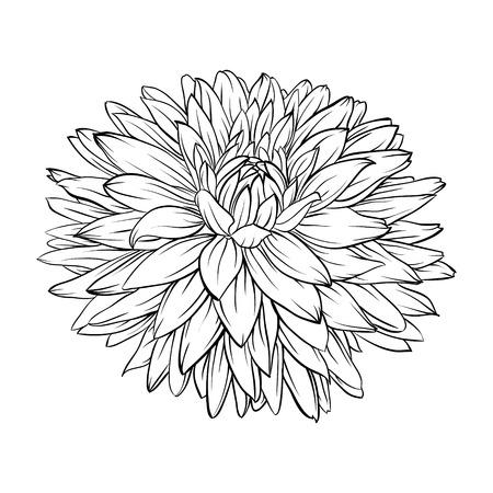 分離された白黒、黒と白の美しいダリアの花。手描きの輪郭線とストローク。グリーティング カードと招待状結婚式、誕生日、母の日、その他の季
