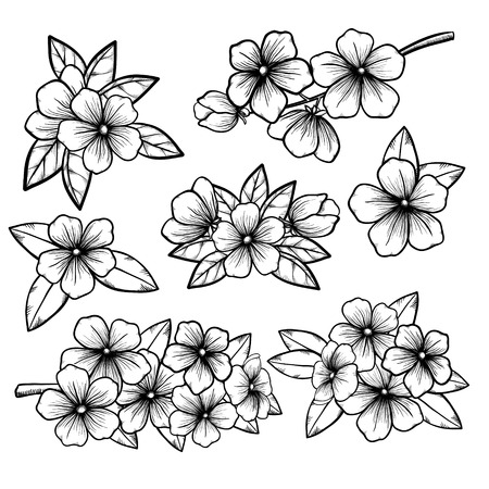 cherries: Beautiful monochrome black and white floral collection with leaves and flowers. for greeting cards and invitations of the wedding, birthday, Valentines Day, mothers day and other seasonal holidays Illustration