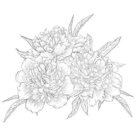 beautiful monochrome black and white bouquet peony isolated on background. Hand-drawn contour line. for greeting card and invitation of wedding, birthday, mother's day and other seasonal holiday
