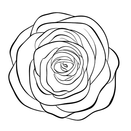 black and white line drawing: Beautiful monochrome black and white rose isolated on white background. Hand-drawn contour line. for greeting cards and invitations of wedding, birthday, mothers day and other seasonal holiday