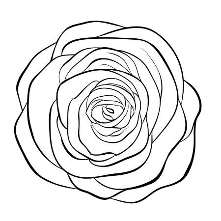 dibujos lineales: Monocromo Hermosa blanco y negro de rosa aislada en el fondo blanco. Dibujado a mano la l�nea de contorno. para tarjetas de felicitaci�n e invitaciones de boda, cumplea�os, d�a de la madre y otro d�a de fiesta estacional