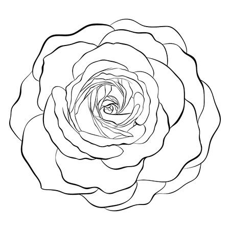 rose blanche: Belle noir et blanc monochrome rose isol� sur fond blanc. Hand-drawn ligne de contour. pour les cartes de v?ux et des invitations de mariage, anniversaire, le jour de m�re et d'autres vacances saisonni�re Illustration