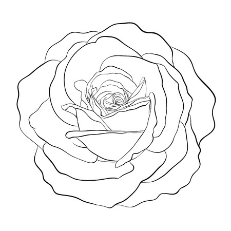 stroking: Beautiful monochrome black and white rose isolated on white background. Hand-drawn contour line. for greeting cards and invitations of wedding, birthday, mothers day and other seasonal holiday