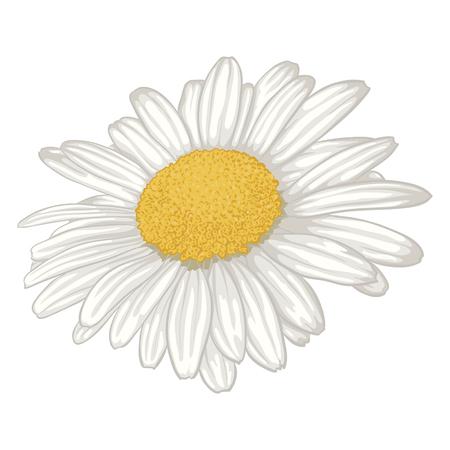 Aislado hermosa flor de la margarita blanca. para tarjetas de felicitación e invitaciones de boda, cumpleaños, día de la madre y otro día de fiesta estacional Foto de archivo - 44960938