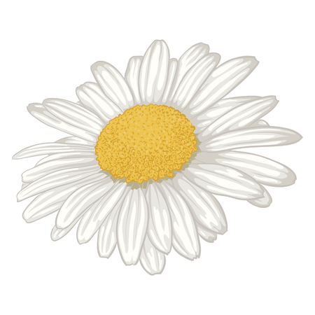 beautiful white daisy flower isolated. for greeting cards and invitations of wedding, birthday, mother's day and other seasonal holiday Vettoriali