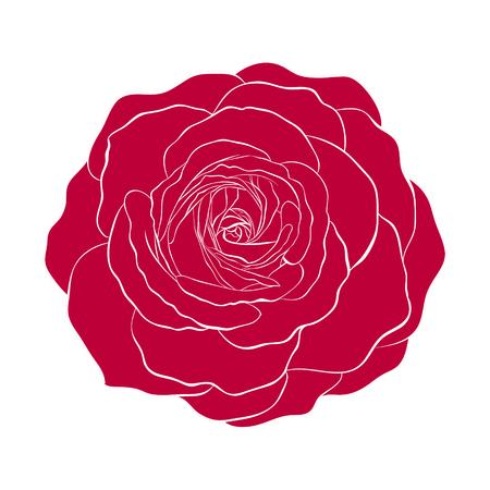 Schöne rote Rose isoliert auf weißem Hintergrund. für Grußkarten und Einladungen der Hochzeit, Geburtstag, Valentinstag, der Tag der Mutter und andere saisonale Urlaub Standard-Bild - 44961437