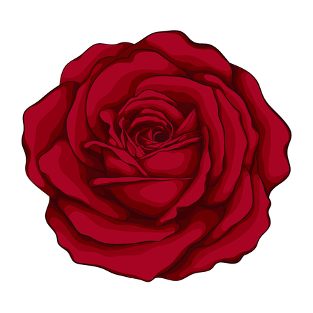 beautiful red rose with effect watercolor isolated on white background. for greeting cards and invitations of the wedding, birthday, Valentine's Day, mother's day and other seasonal holidays
