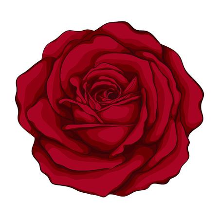 schöne rote mit Wirkung Aquarell Rose auf weißem Hintergrund. für Grußkarten und Einladungen der Hochzeit, Geburtstag, Valentinstag, Muttertag und andere saisonale Urlaub