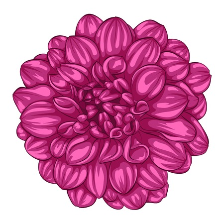 beautiful pink dahlia isolated on white background. for greeting cards and invitations of the wedding, birthday, Valentines Day, mothers day and other seasonal holidays Иллюстрация