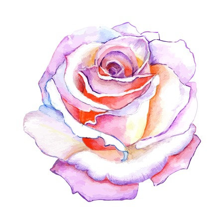 colours: beautiful rose watercolor hand-painted isolated on white background. for greeting cards and invitations of the wedding, birthday, Valentines Day, mothers day and other seasonal holidays