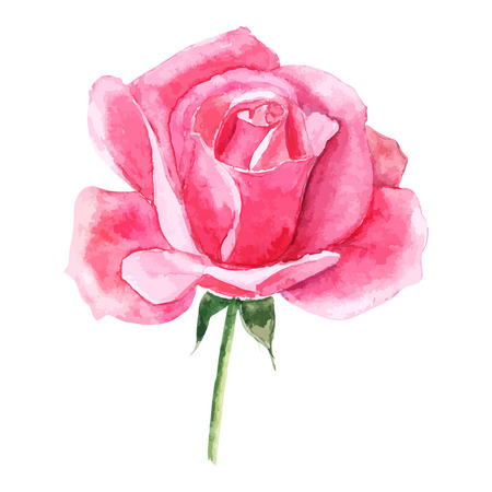 beautiful rose watercolor hand-painted isolated on white background. for greeting cards and invitations of the wedding, birthday, Valentine's Day, mother's day and other seasonal holidays Zdjęcie Seryjne - 47261079