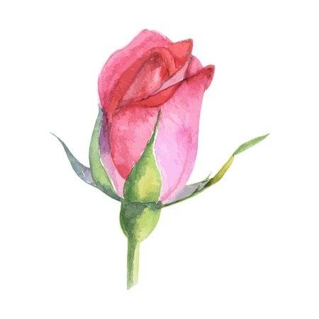 floral decoration: beautiful rose watercolor hand-painted isolated on white background. for greeting cards and invitations of the wedding, birthday, Valentines Day, mothers day and other seasonal holidays