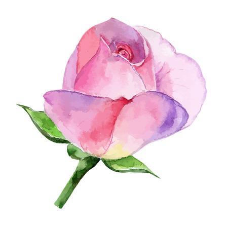 Hermosa rosa acuarela pintado a mano aislado sobre fondo blanco. para tarjetas de felicitación e invitaciones de la boda, cumpleaños, San Valentín, Día de la Madre y otras fiestas de temporada Foto de archivo - 47261085
