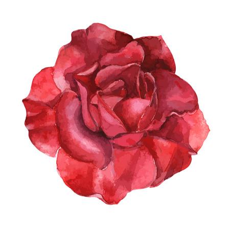 Hermosa rosa acuarela pintado a mano aislado sobre fondo blanco. para tarjetas de felicitación e invitaciones de la boda, cumpleaños, San Valentín, Día de la Madre y otras fiestas de temporada Foto de archivo - 47261086