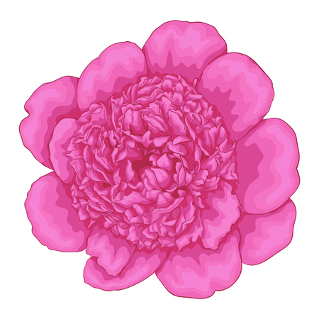 detailed: beautiful pink peony isolated on white background. for greeting cards and invitations of the wedding, birthday, Valentines Day, mothers day and other seasonal holidays Illustration