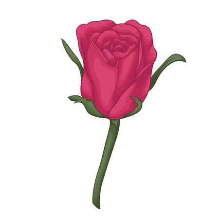 tige: belle rose rouge avec effet aquarelle isolé sur fond blanc. pour les cartes de voeux et invitations de mariage, anniversaire, Saint-Valentin, la fête des mères et autres fêtes saisonnières Illustration