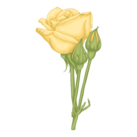 rosebud: beautiful yellow rose isolated on white background. for greeting cards and invitations of the wedding, birthday, Valentines Day, mothers day and other seasonal holidays Illustration