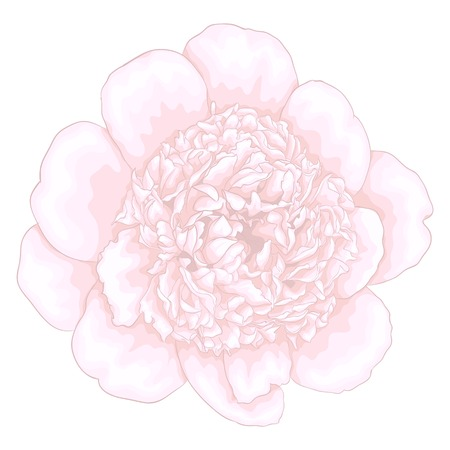 nature one painted: beautiful pink peony isolated on white background. for greeting cards and invitations of the wedding, birthday, Valentines Day, mothers day and other seasonal holidays Illustration