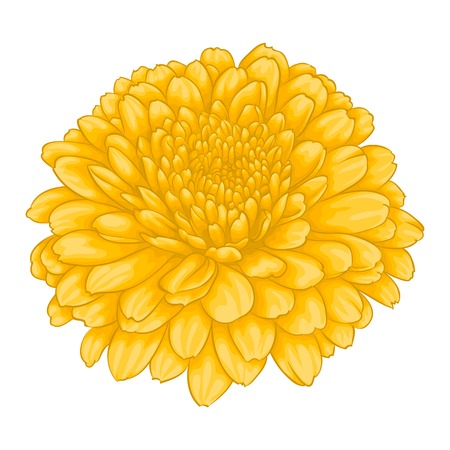 beautiful yellow chrysanthemum flower. effect watercolor isolated on white background. for greeting card and invitation of the wedding, birthday, Valentine's Day, mother's day and other seasonal holiday Vettoriali