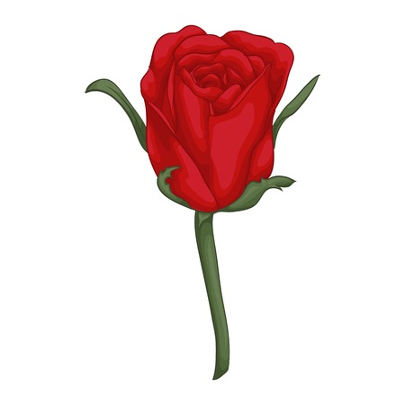 buds: beautiful red rose isolated on white background. for greeting cards and invitations of the wedding, birthday, Valentines Day, mothers day and other seasonal holidays Illustration