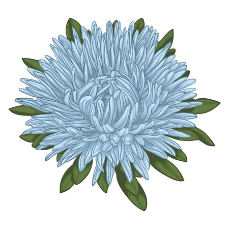 aster: Beautiful blue aster isolated on white background. for greeting cards and invitations of the wedding, birthday, Valentines Day, mothers day and other seasonal holidays Illustration