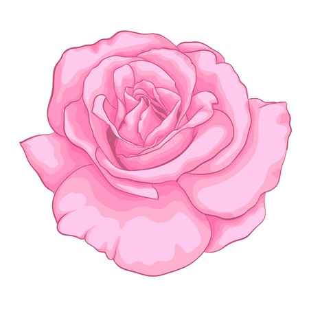 beautiful pink rose isolated on white background. for greeting cards and invitations of the wedding, birthday, Valentines Day, mothers day and other seasonal holidays Illustration