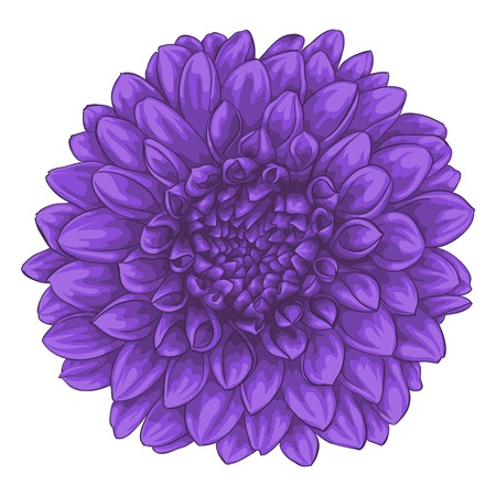 beautiful dahlia isolated on white background. for greeting cards and invitations of the wedding, birthday, Valentine's Day, mother's day and other seasonal holidays