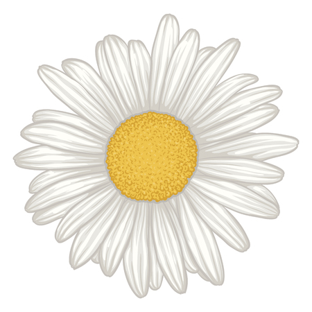 beautiful white daisy flower isolated. for greeting cards and invitations of wedding, birthday, mother's day and other seasonal holiday Stock Illustratie