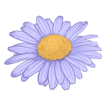 daisyflower: beautiful daisy flower isolated on white background. for greeting cards and invitations of wedding, birthday, mothers day and other seasonal holiday