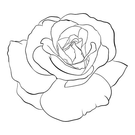 Belle noir et blanc monochrome rose, isolé sur fond. Hand-drawn ligne. pour les cartes de v?ux et des invitations de mariage, anniversaire, Saint-Valentin, le jour de mère et d'autres vacances saisonnière Banque d'images - 50874450