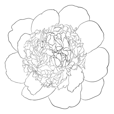 rose bouquet: beautiful monochrome black and white peony flower isolated Hand-drawn contour line . for greeting card and invitation of the wedding, birthday, Valentines Day, mothers day and other seasonal holiday
