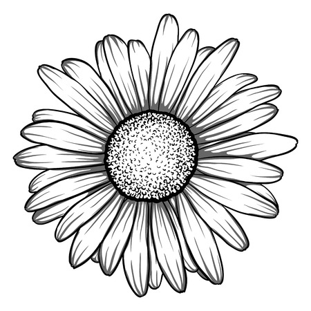 chamomile flower: beautiful monochrome, black and white daisy flower isolated. for greeting cards and invitations of the wedding, birthday, Valentines Day, mothers day and other seasonal holiday