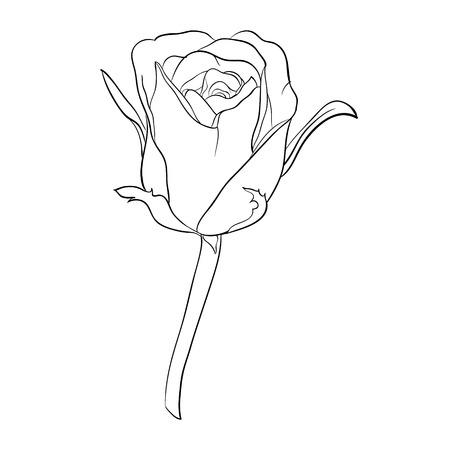 Belle noir et blanc monochrome rose, isolé sur fond. Hand-drawn ligne. pour les cartes de v?ux et des invitations de mariage, anniversaire, Saint-Valentin, le jour de mère et d'autres vacances saisonnière
