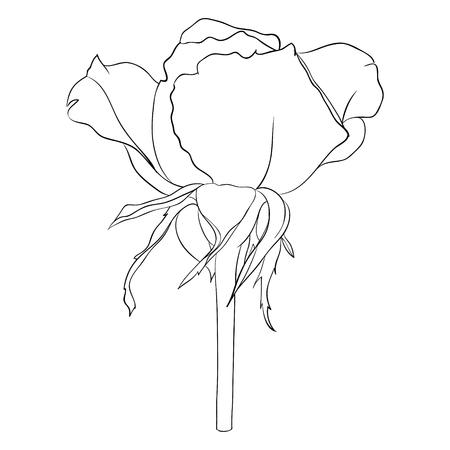 blanco y negro hermoso y blanco negro rosa aislada en el fondo. línea dibujados a mano. para tarjetas de felicitación e invitaciones de la boda, cumpleaños, San Valentín, día de la madre y otra temporada de vacaciones