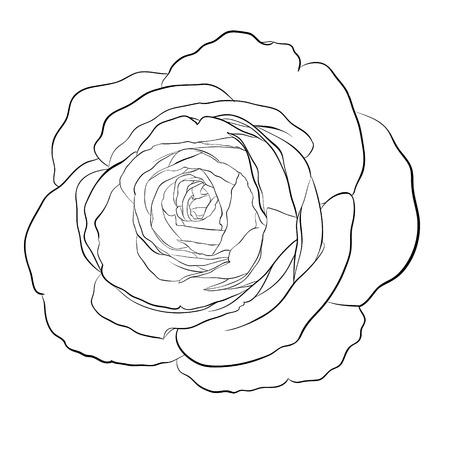 white rose: Beautiful monochrome black and white rose isolated on background. Hand-drawn line. for greeting cards and invitations of the wedding, birthday, Valentines Day, mothers day and other seasonal holiday