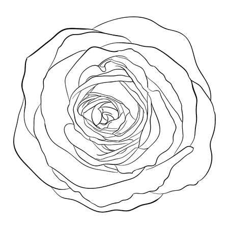 stroking: Beautiful monochrome black and white rose isolated on background. Hand-drawn line. for greeting cards and invitations of the wedding, birthday, Valentines Day, mothers day and other seasonal holiday